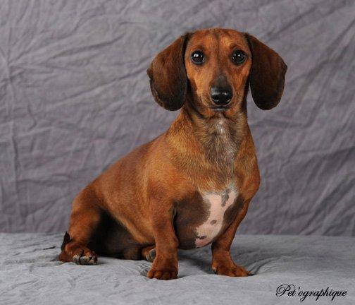 Dog rescues vegas animal rescue for Dog pound las vegas nevada