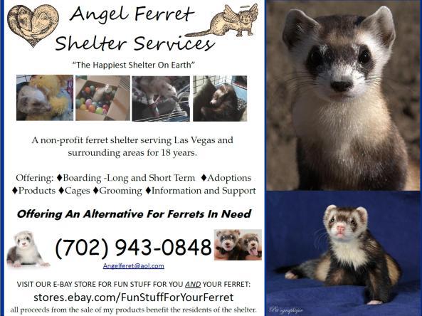 Angel Ferret Rescua