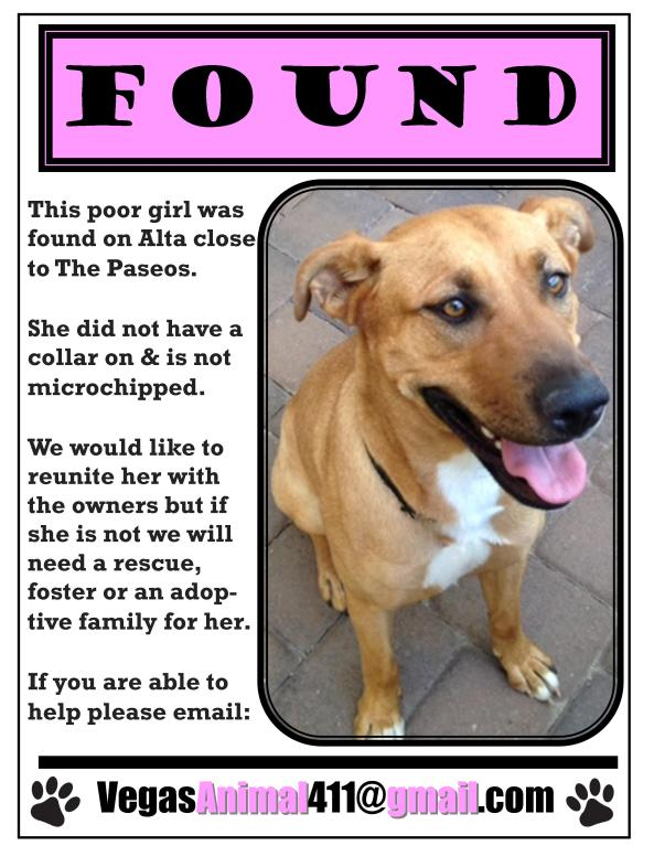 FOUND FEMALE RIDGEBACK MIX