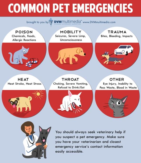 DVM Common Pet Emergencies