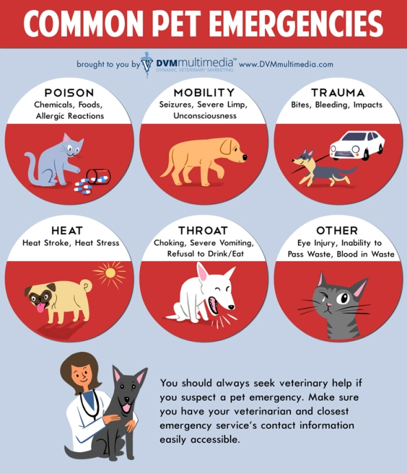 DVM Common Pet Emergencies