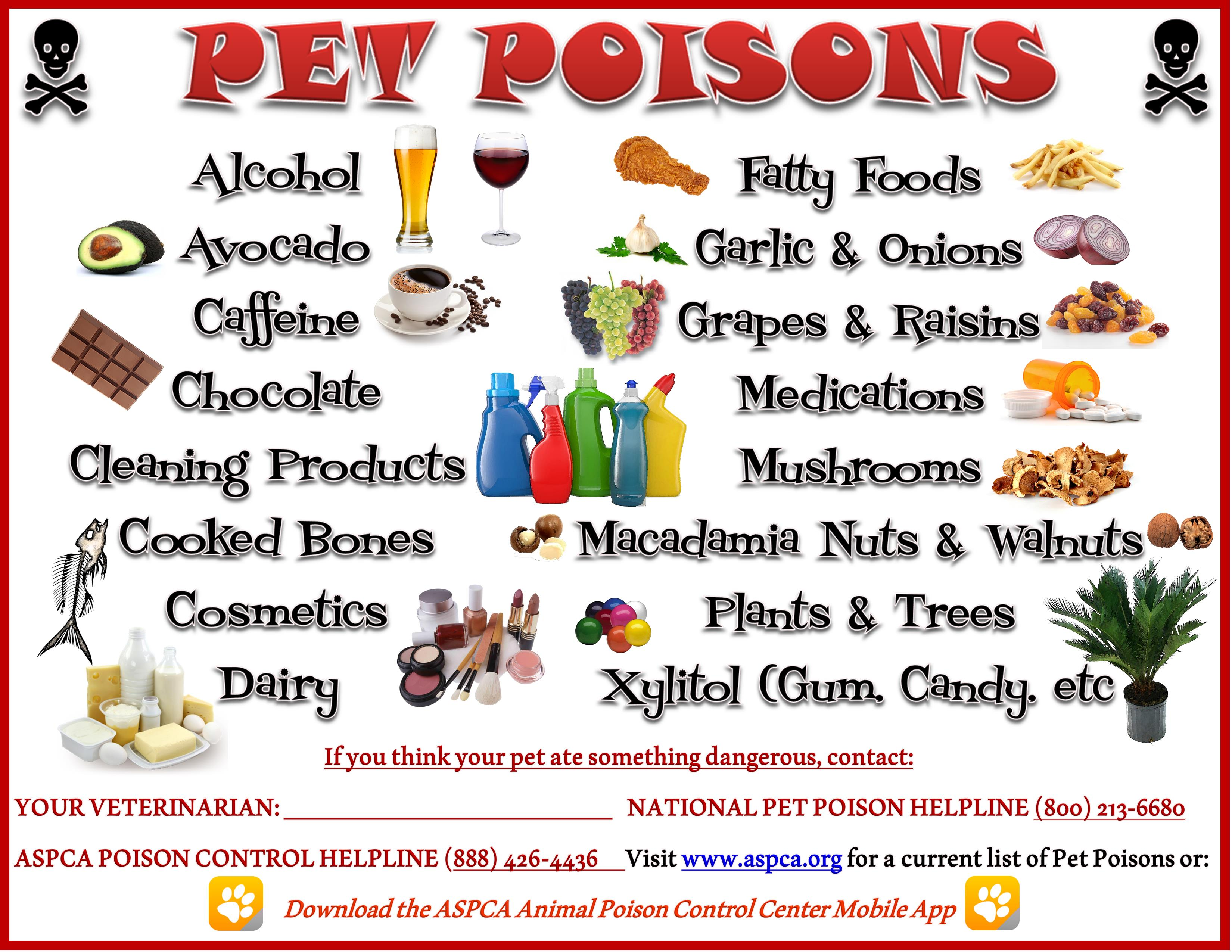pet-poisons---updated-feb-28th-2015_16650084616_o