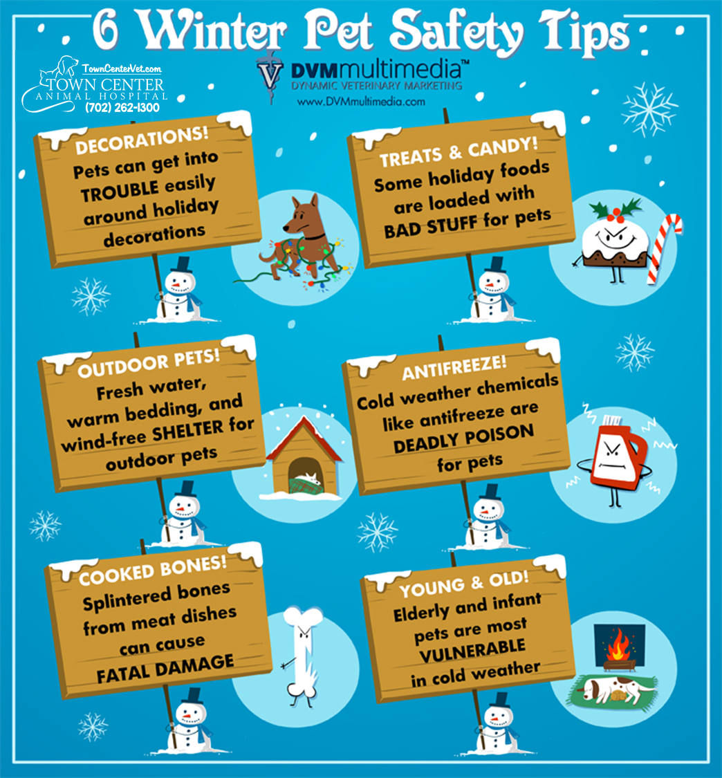 TCAH DVM - 6 Winter Tips