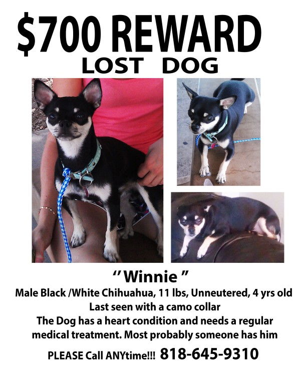 Winnie - LOST DOG a
