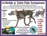 Joint Ad LV Pet Scene Updated April 13th 2015
