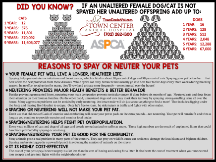 reasons to spay 2015