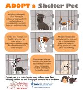 TCAH DVM - Adopt A Shelter Pet