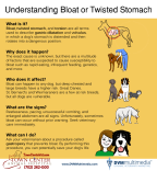 TCAH DVM - Bloat Twisted Stomach
