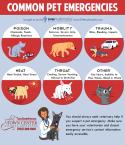 TCAH DVM - Common Pet Emergencies