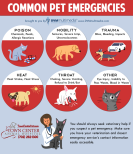 TCAH DVM - Common Pet Emergencies