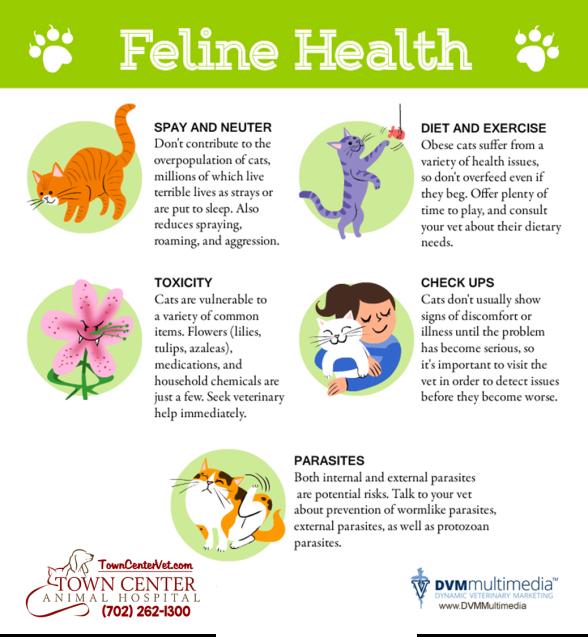 TCAH DVM - Feline Health