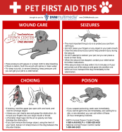 TCAH DVM - Pet First Aid