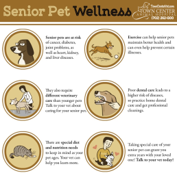 TCAH DVM - Senior Pet Wellness